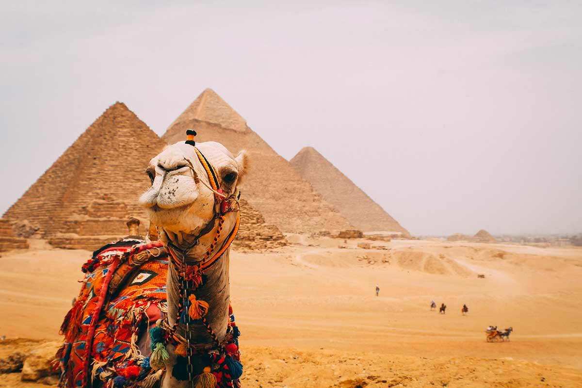 kamel-foran-pyramide